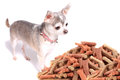 Chihuahua dog and treats Stock Photos