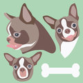 Chihuahua head vector and illustration of and bone Stock Photo