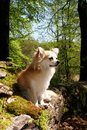 Chihuahua in the woods posing on a fallen tree Stock Photo