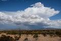 Chihuahuan Desert Desolation Royalty Free Stock Photo