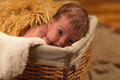 The child in a basket baby Royalty Free Stock Photo