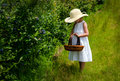 Child with basket picking Michigan berries Royalty Free Stock Photo