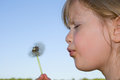 Child blowing dandelion. Royalty Free Stock Photo
