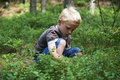 Child boy picking wild blueberries in a blueberry forest Royalty Free Stock Photo