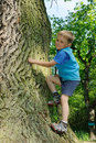 Child climbing big tree Royalty Free Stock Photo
