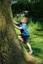 Child climbing tree Stock Photos