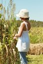 Child in a Corn Field Stock Image