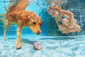 Child with dog dive underwater in swimming pool