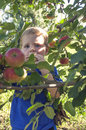 Child eating apple young boy an in an orchard Royalty Free Stock Photo