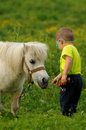 Child feeding white pony young boy grass to a Royalty Free Stock Images