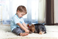 Child feeding Yorkshire terrier dog at home Royalty Free Stock Images