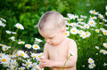 Child with flowers cute boy camomile Royalty Free Stock Photo
