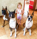 Child and her dogs cute playing with three boxer Stock Photos