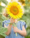 Child hiding by sunflower Stock Photo