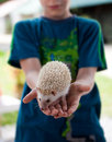 Child holding hedgehog Royalty Free Stock Photo