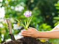 Child holding young plant in hands above soil Royalty Free Stock Photo