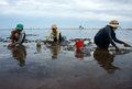 Child labor on vietnam beach mekong delta july unidentified children women working when tide going out people rake black sand to Stock Image