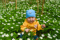 Child in the middle of white flowers Stock Image