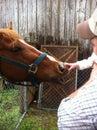 Child petting horse Royalty Free Stock Photo