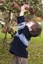 Child Picking Apple