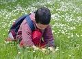 Child picking daises Royalty Free Stock Photo