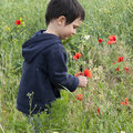 Child picking flowers Stock Photo
