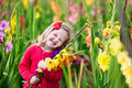 Child picking fresh gladiolus flowers Royalty Free Stock Photo