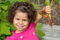 Child picking fresh organic carrots Royalty Free Stock Image