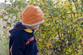Child picking rose hips wild at autumn nature Royalty Free Stock Images