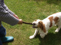 Child playing with dog Stock Images