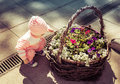 A child is playing in a flower bed Royalty Free Stock Photo