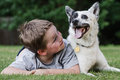 Child playing with his pet dog a blue heeler Royalty Free Stock Images