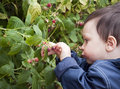 Child with raspberries Royalty Free Stock Images