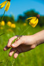 Child reaches for a Yellow coneflower Royalty Free Stock Photos