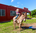 Child riding a miniature donkey cute Stock Photos