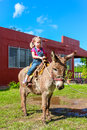 Child riding a miniature donkey cute Stock Photography