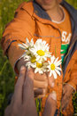 Child s hand giving mother flowers daisies Stock Photo