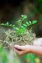 Child's Hands Holding Fresh Small Plant Royalty Free Stock Photo