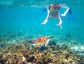 Child snorkeling in a tropical sea next to a turtle Royalty Free Stock Photo