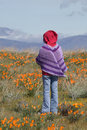 Child Standing in Field of Poppies Royalty Free Stock Photo