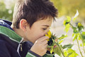 Child with sunflower who holds a to smell it Royalty Free Stock Image