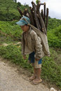 Child transports firewood, Laos Stock Photography