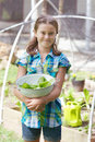 Child in veggie patch young girl holding a white colander with freshly picked lettuce a protected from birds by a net Royalty Free Stock Photo