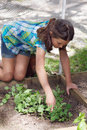 Child working in veggie patch young girl doing some gardening her Stock Photography