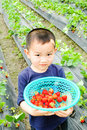 Children carrying Strawberry Stock Images