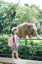 Children feed Asian elephants in tropical safari park during summer vacation. Kids watch animals