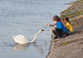 Children feeding swan little a bread at riverbank Stock Photos