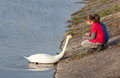 Children feeding swan little at riverbank Stock Photography
