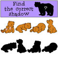 Children games find the correct shadow little cute baby bears four Stock Images