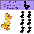 Children games: Find the correct shadow. Little cute duckling.